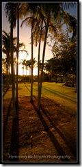 Darwin, Centennial Park, Park trees against the light