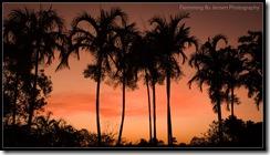 Darwin, Centennial Park, Palms at Dusk