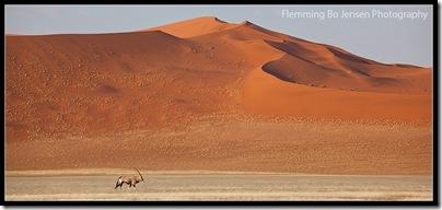 Namib Dunes and Oryx. Flemming Bo Jensen Photography