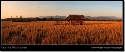Laos Field of Dreams. Flemming Bo Jensen